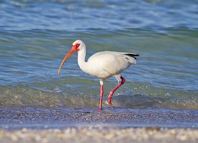 Coastal Birds Photograph - One Step At A Time by Betsy Knapp