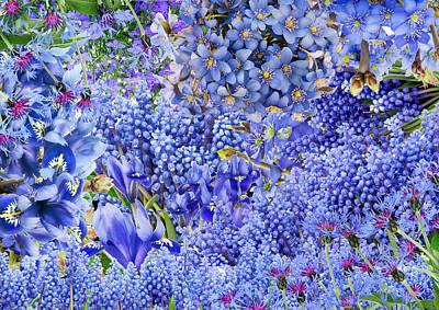 Flower Express Photograph - Only Blue Flowers by Aleksandr Volkov