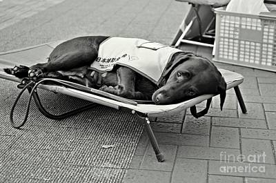 Dog Photograph - Only Human by Dean Harte