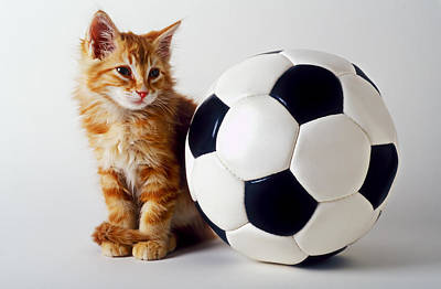 Domestic Pets Photograph - Orange And White Kitten With Soccor Ball by Garry Gay