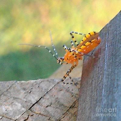 Orange Bug 1 Print by Nick