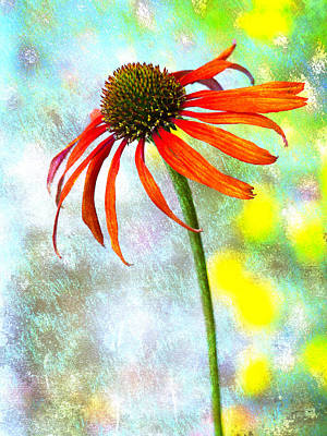 Coneflowers Photograph - Orange Coneflower On Green And Yellow by Carol Leigh