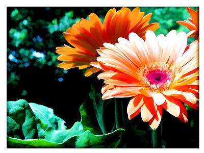 Gerber Daisy Painting - Orange Gerber Daisies by Elaine Plesser