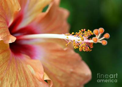 Orange Hibiscus Print by Sabrina L Ryan