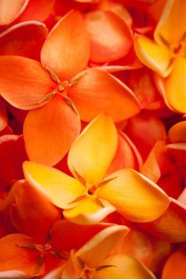 Orange Jungle Flame Flower Print by Johan Larson