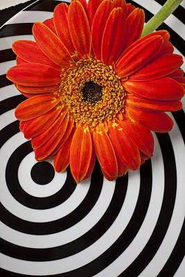 Flower Ring Photograph - Orange Mum With Circles by Garry Gay