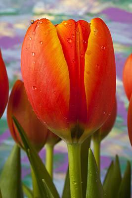 Orange Tulip Close Up Print by Garry Gay