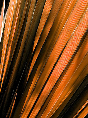 Orange Watercolor Palm Print by Bonnie Bruno