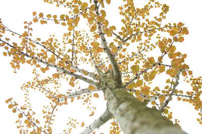 Photograph - Oranged 2 by Angela Hansen