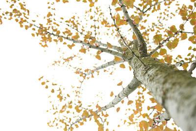 Photograph - Oranged by Angela Hansen