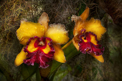 Wet Orchids Photograph - Orchid - Cattleya - Dripping With Passion  by Mike Savad