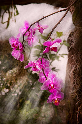 Wet Orchids Photograph - Orchid - Tropical Passion by Mike Savad
