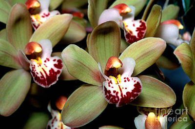 Orchid 15 Print by Terry Elniski
