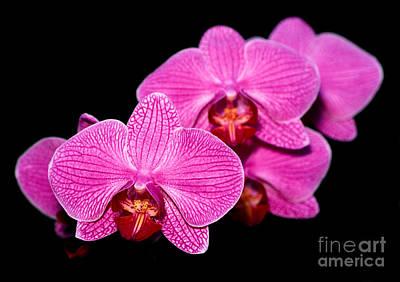 Cattleya Photograph - Orchid 17 by Terry Elniski