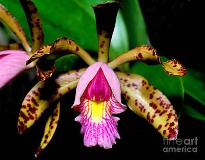 Orchid 18 Print by Terry Elniski