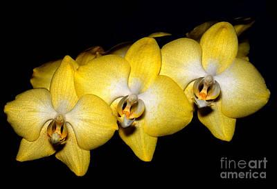 Orchid 19 Print by Terry Elniski