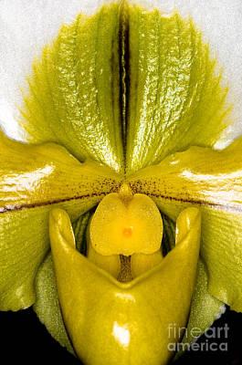 Orchid 32 Print by Terry Elniski