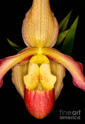 Orchids Photograph - Orchid 35 by Terry Elniski