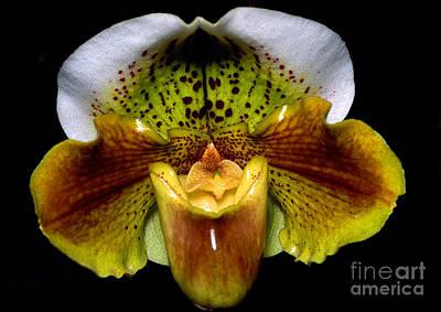 Orchid 53 Print by Terry Elniski