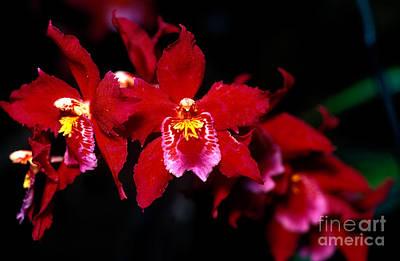 Orchid 56 Print by Terry Elniski