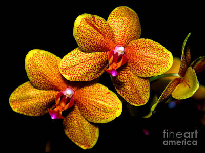Orchid 58 Print by Terry Elniski
