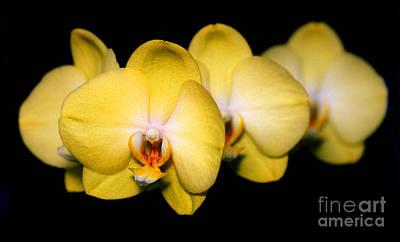 Orchid 62 Print by Terry Elniski