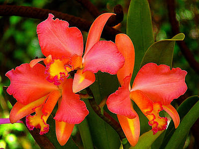 Orchid Dream Print by Blair Wainman