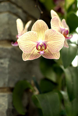 Flower Photograph - Orchid by Floyd Menezes