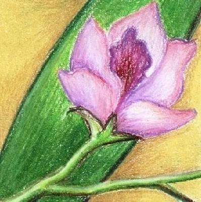 Orchid Original by Judith Correa