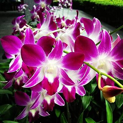 Orchids Photograph - Orchid Oh Orchid... #orchid #flower by Ck Chai