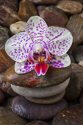 Wet Orchids Photograph - Orchid On Stack Of Rocks by Garry Gay
