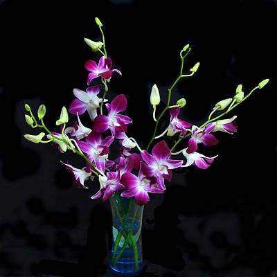 Orchid Spray. Original by Terence Davis