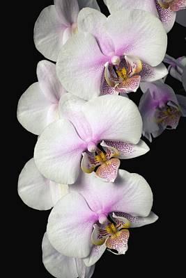 Orchids Print by David Chapman