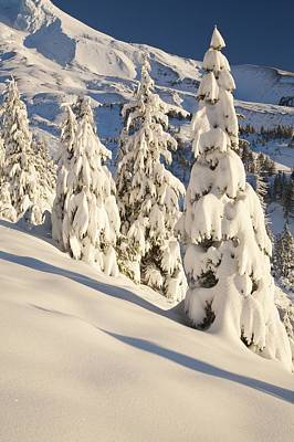 Oregon, United States Of America Snow Print by Craig Tuttle