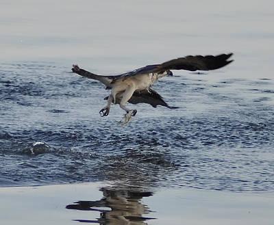 Osprey Digital Art - Osprey Catching A Fish by Bill Cannon