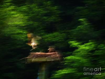 Osprey Motion Print by Rrrose Pix