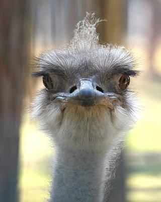 Ostrich Original by Igors Parhomciks