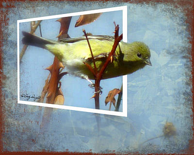 Out Of Bounds Female Goldfinch Print by Cindy Wright