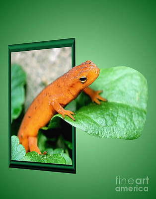 Salamanders Digital Art - Out Of Bounds Orange Salamander by Smilin Eyes  Treasures