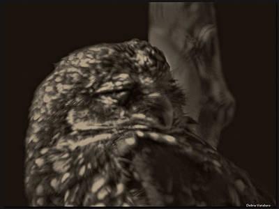Owl Nights Print by Debra     Vatalaro