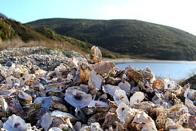 Oyster Shell Hill At Drakes Bay Oyster Company In Point Reyes California . 7d9849 Print by Wingsdomain Art and Photography