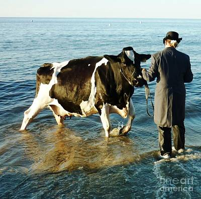 Cow Photograph - Paddling Pool by Therese Alcorn