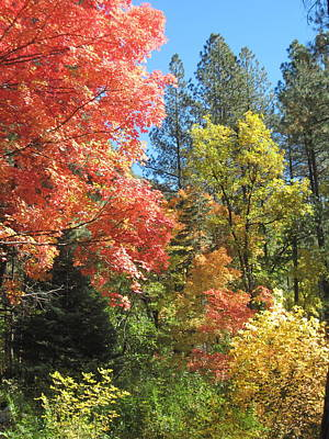 West Fork Photograph - Painter's Palette by Sandy Tracey