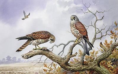 Pair Of Kestrels Print by Carl Donner