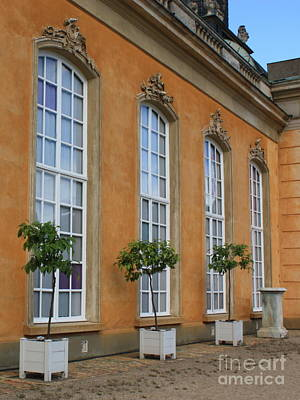 Yellow Photograph - Palace Windows And Topiaries by Carol Groenen