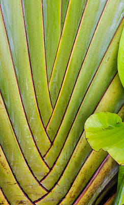 Abstract Windmill Photograph - Palm by Jean Noren