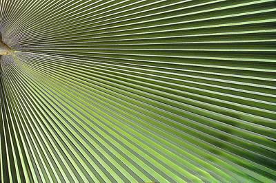 Palm Leaf-2 Print by Rudy Umans
