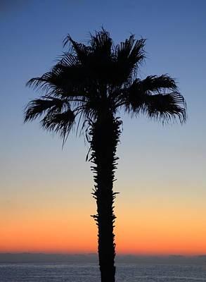 Sunset Photograph - Palm Tree Silhouette   by Catherine Murton
