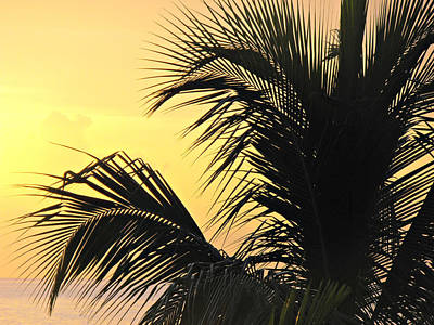 Beach Photograph - Palm Tree Sunset by Kimberly Perry