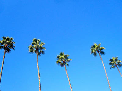 Palms Print by Jon Berry OsoPorto